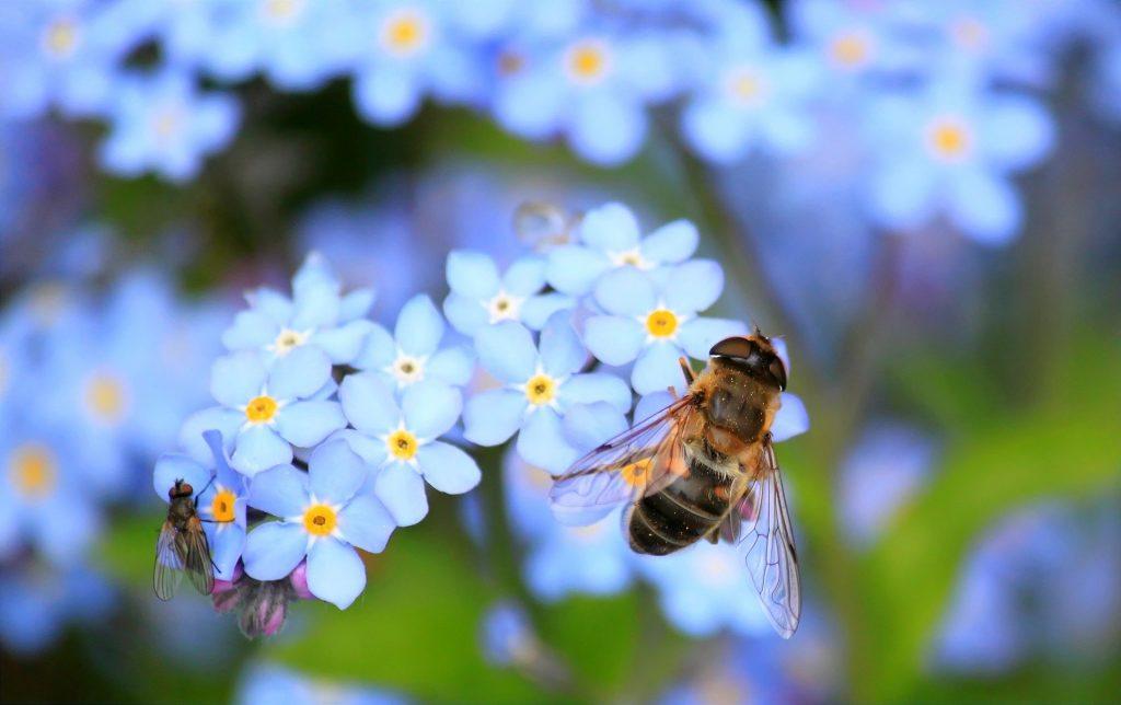 Abeille sur des fleurs - Alhaya